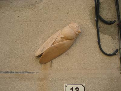 Cicada on Wall