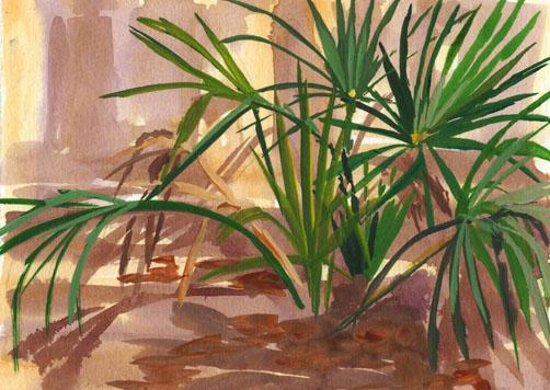 Hunting Island Palms