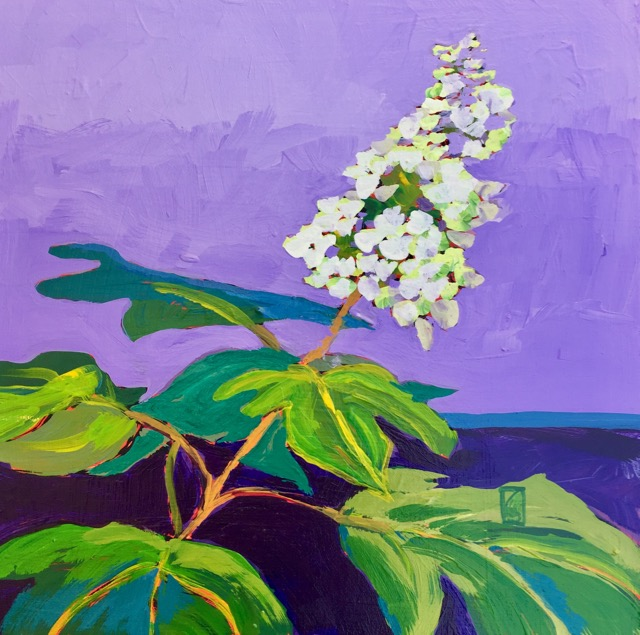 Oakleaf Hydrangea 12x12 inches Acrylic on gallery wrap canvas ©2017 Lucinda Howe $395