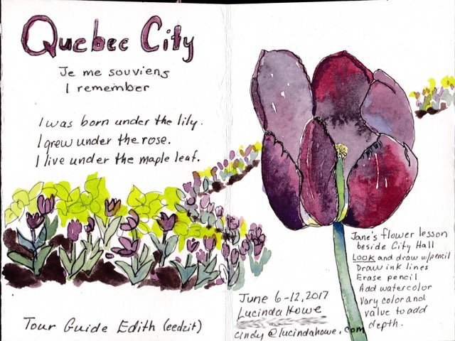 Quebec City Tulips ©2017 Lucinda Howe